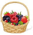 basket with berries vector image vector image