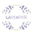 lavender flower round frame on white vector image vector image