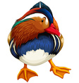 Madarin duck vector image vector image