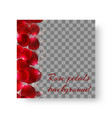 pattern with red rose petals vector image vector image