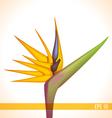 strelitzia flower vector image vector image