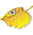 autumn leaves and butterfly vector image vector image