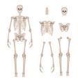 human skeleton body parts skull bones hands foot vector image