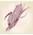 corncob hand drawn llustration realistic vector image vector image