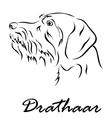 Drathaar vector image