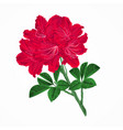 flowers red rhododendrons twig vintage vector image vector image