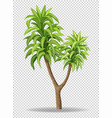 green tree on transparent background vector image vector image