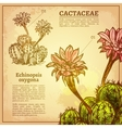Cactus Botanical vector image vector image