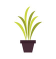 home plant vase vector image