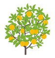 peach tree fruit tree vector image