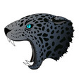 angry panther cougar portrait jaguar vector image vector image