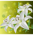 Invitation or greeting card with lily flowers vector image vector image
