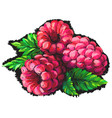 raspberry abstract multicolored image vector image