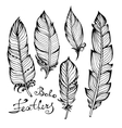Hand drawn bird black feathers closeup isolated on vector image