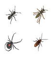 an insect arthropod an osa a spider a cockroach vector image vector image