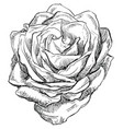 hand drawing flower 4 vector image vector image