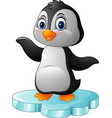 cartoon penguin standing on floe vector image vector image