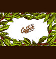 coffee green leaves background in vintage style vector image vector image