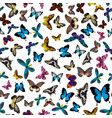 colorful print pattern seamless butterflies vector image