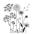 hand drawn of wild flower and dandelion isolated vector image vector image