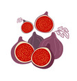 isolated figs design colorful collection of vector image