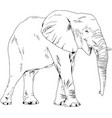 large full-length elephant drawn in ink by hand vector image