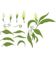 Set of Green Leaves and Flowers vector image