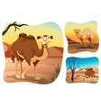 Camels in the dry desert vector image vector image