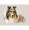 Collie Animal dog watercolor vector image vector image