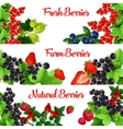 Fresh berries banners set vector image vector image