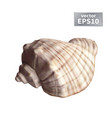 realistic seashell isolated vector image vector image