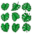 set monstera leaves design element vector image