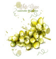 white grapes watercolor painted splash vector image vector image