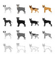 dalmatian terrier shepherd and other web icon vector image vector image