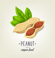 sketch of realistic peanut with leaves and vector image