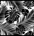 seamless pattern palm tree leaves vector image