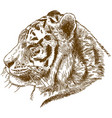 engraving drawing of siberian tiger or amur vector image vector image