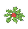 hand drawn christmas holly leaves bunch vector image