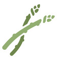 asparagus flat icon