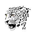 drawing a spotted leopard vector image