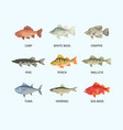 river and sea fish set huge sea bass fast vector image vector image
