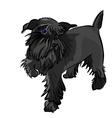 schnauzer dog vector image vector image