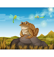 Brown toad sitting on rock vector image vector image