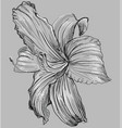 grey flower 1 vector image vector image