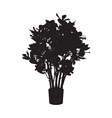 Office and house plant Ficus silhouette vector image vector image