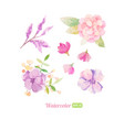 set of watercolor floral elements for decoration vector image