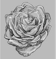 grey flower 4 vector image