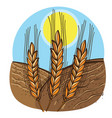 growing wheat on field and sunny day vector image
