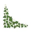 ivy branch icon green fresh ornamental design vector image vector image