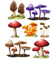 set of different mushrooms vector image vector image